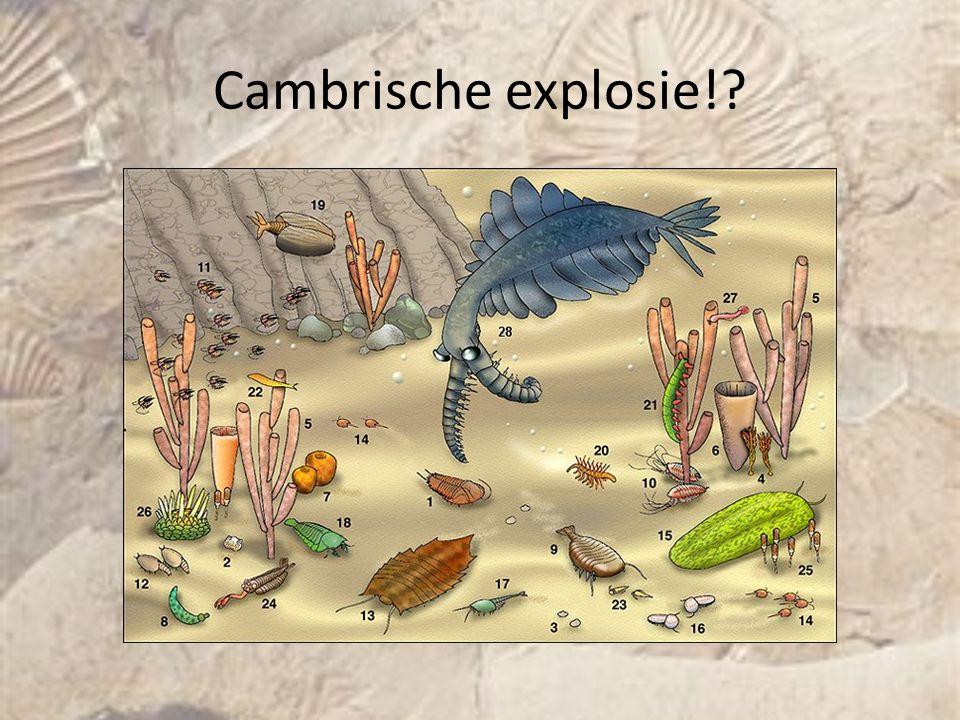 Cambrische explosie!?