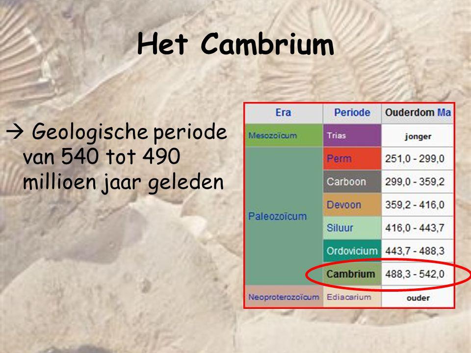 Het Cambrium Vóór het Cambrium (Ediacarium)weinig of geen fossielen :  Eenvoudige levensvormen zonder skeletelementen (soft-bodied)  Overgang mogelijk met massale extinctie