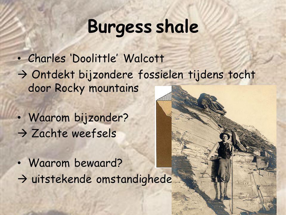 Burgess shale Charles 'Doolittle' Walcott  Ontdekt bijzondere fossielen tijdens tocht door Rocky mountains Waarom bijzonder?  Zachte weefsels Waarom