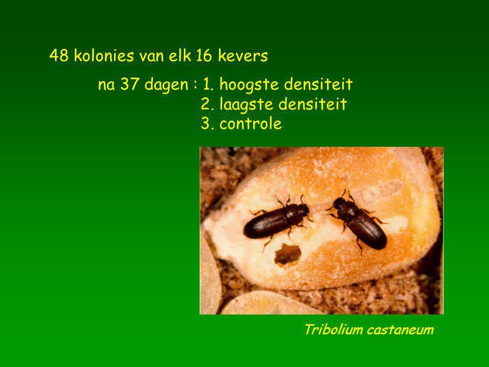 Tribolium castaneum 48 kolonies van elk 16 kevers na 37 dagen : 1. hoogste densiteit 2. laagste densiteit 3. controle