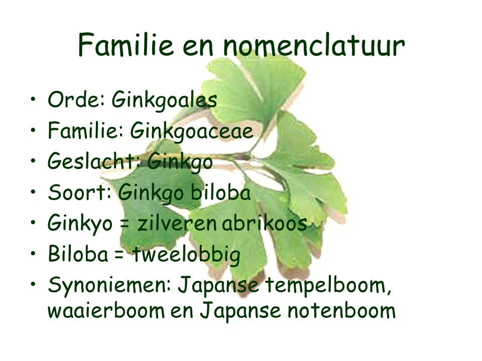 Familie en nomenclatuur Orde: Ginkgoales Familie: Ginkgoaceae Geslacht: Ginkgo Soort: Ginkgo biloba Ginkyo = zilveren abrikoos Biloba = tweelobbig Synoniemen: Japanse tempelboom, waaierboom en Japanse notenboom