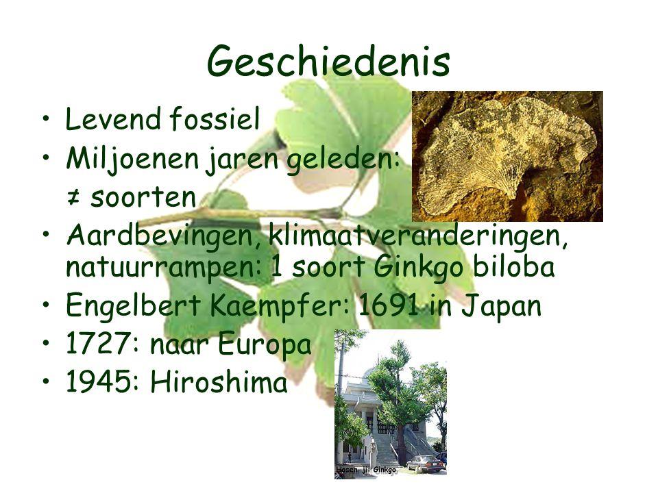 Geschiedenis Levend fossiel Miljoenen jaren geleden: ≠ soorten Aardbevingen, klimaatveranderingen, natuurrampen: 1 soort Ginkgo biloba Engelbert Kaempfer: 1691 in Japan 1727: naar Europa 1945: Hiroshima