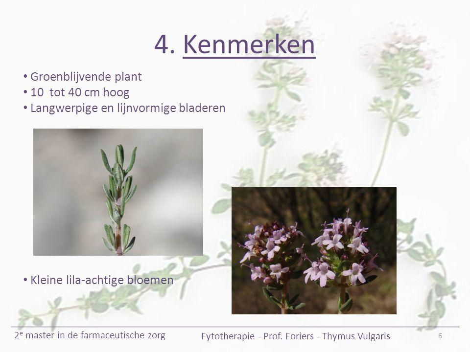 4. Kenmerken 6 Fytotherapie - Prof. Foriers - Thymus Vulgaris 2 e master in de farmaceutische zorg Groenblijvende plant 10 tot 40 cm hoog Langwerpige