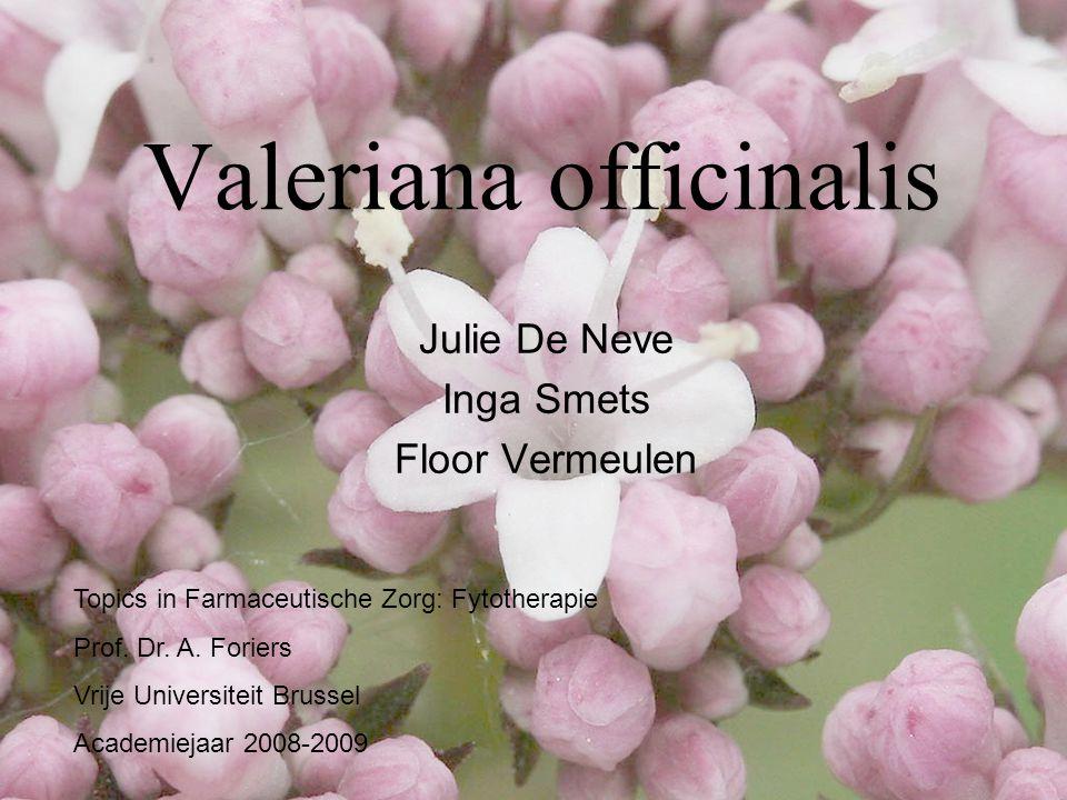 Valeriana officinalis Julie De Neve Inga Smets Floor Vermeulen Topics in Farmaceutische Zorg: Fytotherapie Prof. Dr. A. Foriers Vrije Universiteit Bru
