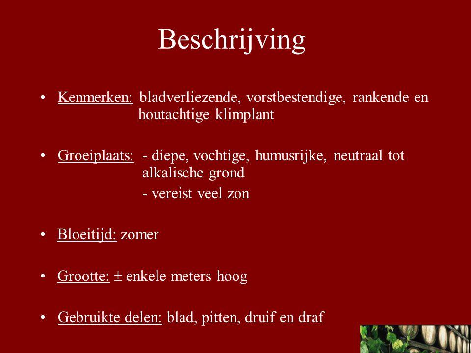 Bereiding Infuus: R/ Wijnstokblad 50g Duivekervelkruid 25g Marjoleinblad en bloemen 25g S/ 1 eetlepel per tas kokend water, 10 min infuseren.