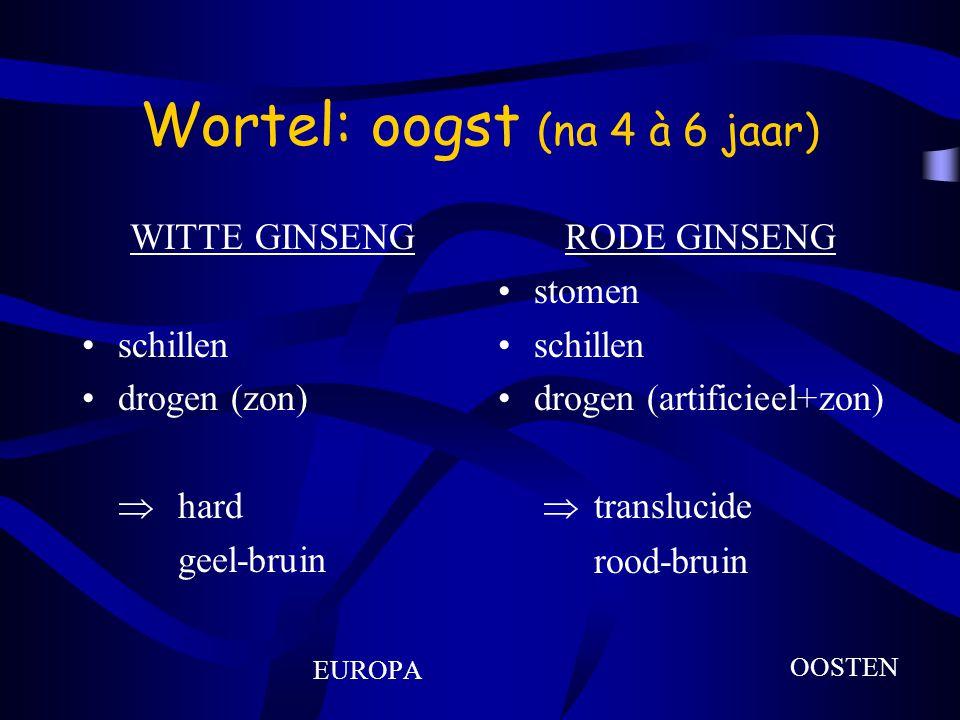 Wortel: oogst (na 4 à 6 jaar) WITTE GINSENG schillen drogen (zon)  hard geel-bruin EUROPA RODE GINSENG stomen schillen drogen (artificieel+zon)  translucide rood-bruin OOSTEN