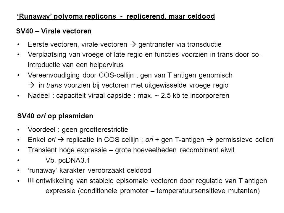 'Runaway' polyoma replicons - replicerend, maar celdood SV40 – Virale vectoren Eerste vectoren, virale vectoren  gentransfer via transductie Verplaat