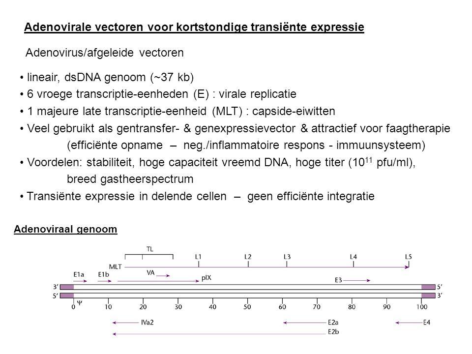 Adenovirale vectoren voor kortstondige transiënte expressie Adenovirus/afgeleide vectoren lineair, dsDNA genoom (~37 kb) 6 vroege transcriptie-eenhede