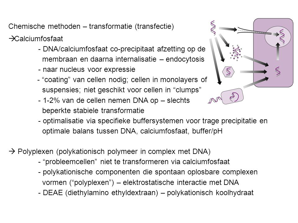 Chemische methoden – transformatie (transfectie)  Calciumfosfaat - DNA/calciumfosfaat co-precipitaat afzetting op de membraan en daarna internalisatie – endocytosis - naar nucleus voor expressie - coating van cellen nodig; cellen in monolayers of suspensies; niet geschikt voor cellen in clumps - 1-2% van de cellen nemen DNA op – slechts beperkte stabiele transformatie - optimalisatie via specifieke buffersystemen voor trage precipitatie en optimale balans tussen DNA, calciumfosfaat, buffer/pH  Polyplexen (polykationisch polymeer in complex met DNA) - probleemcellen niet te transformeren via calciumfosfaat - polykationische componenten die spontaan oplosbare complexen vormen ( polyplexen ) – elektrostatische interactie met DNA - DEAE (diethylamino ethyldextraan) – polykationisch koolhydraat