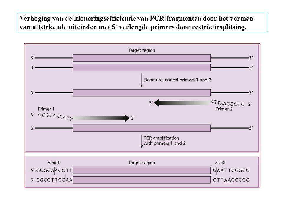 Verhoging van de kloneringsefficientie van PCR fragmenten door het vormen van uitstekende uiteinden met 5' verlengde primers door restrictiesplitsing.