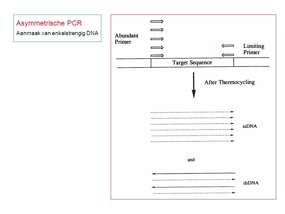 Asymmetrische PCR Aanmaak van enkelstrengig DNA