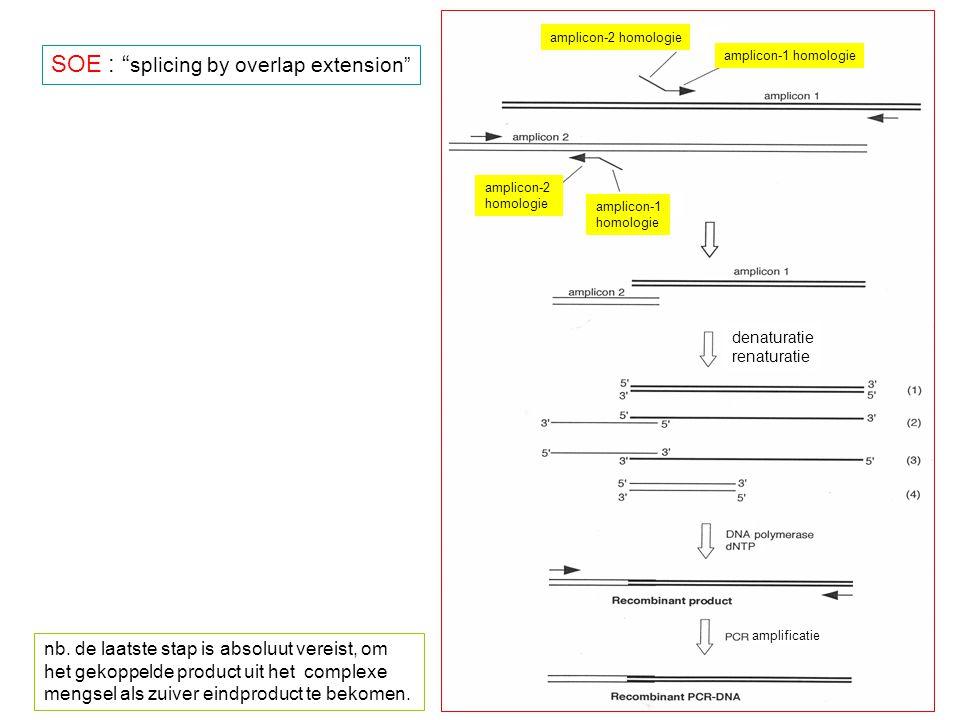 """amplicon-2 homologie amplicon-1 homologie amplicon-2 homologie amplicon-1 homologie denaturatie renaturatie amplificatie SOE : """" splicing by overlap e"""