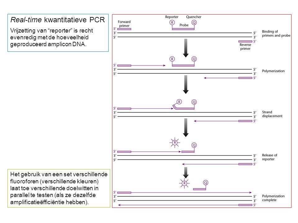 """Real-time kwantitatieve PCR Vrijzetting van """"reporter"""" is recht evenredig met de hoeveelheid geproduceerd amplicon DNA. Het gebruik van een set versch"""