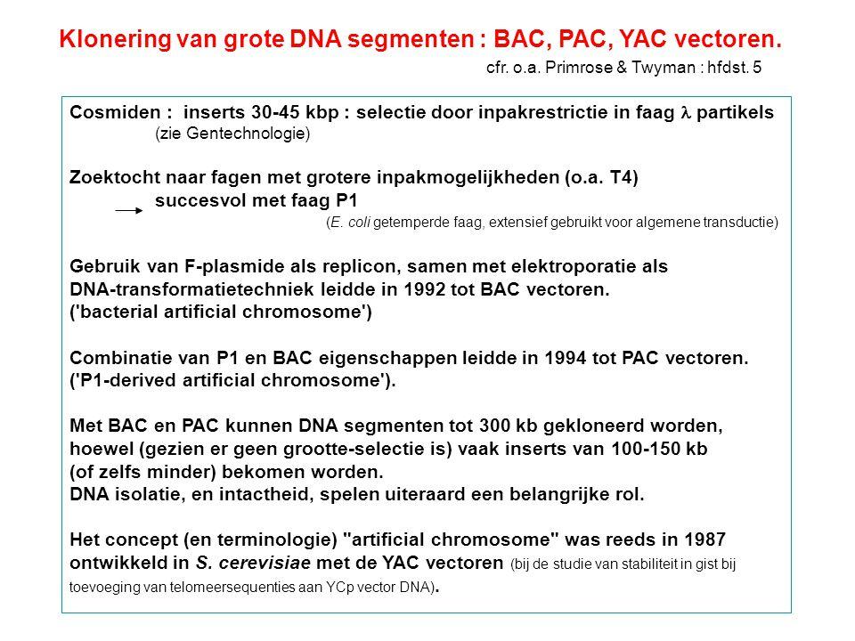 YAC-vectoren : 'yeast' artificieel chromosoom (gist) 1987 Klassieke YACs : lineair DNA : architectuur zoals gist chromosoom in 1982 werd aangetoond dat in gist een extra DNA molecule lineair behouden kon blijven mits toevoeging van telomeer sequenties in een YRp; vereiste voor stabiliteit : minimum 40-50 kbp lengte in 1987 werd een kloneringsprocedure uitgewerkt : YAC vectoren recombinante YAC's door ligatie van grote DNA fragmenten aan twee armen introductie in gist door transformatie op iedere arm : een selecteerbare merker, een telomeer sequentie - één arm bevat een centromeer, ARS (replicatie in gist), en ori (voor E.