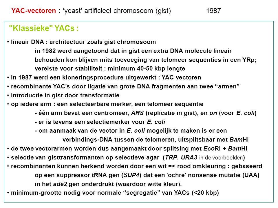 YAC-vectoren : 'yeast' artificieel chromosoom (gist) 1987