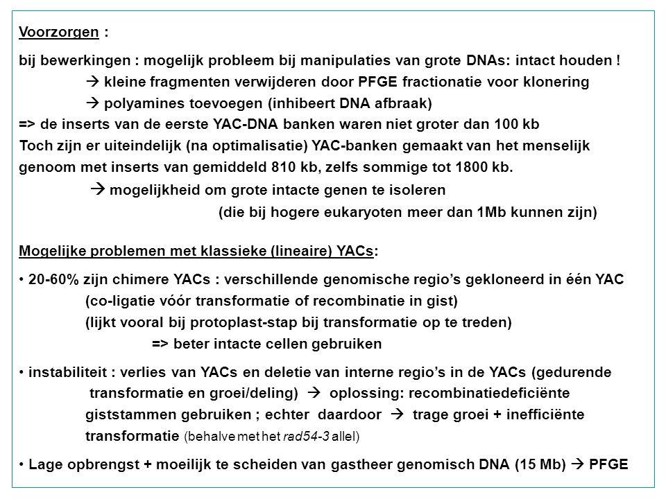 Voorzorgen : bij bewerkingen : mogelijk probleem bij manipulaties van grote DNAs: intact houden !  kleine fragmenten verwijderen door PFGE fractionat