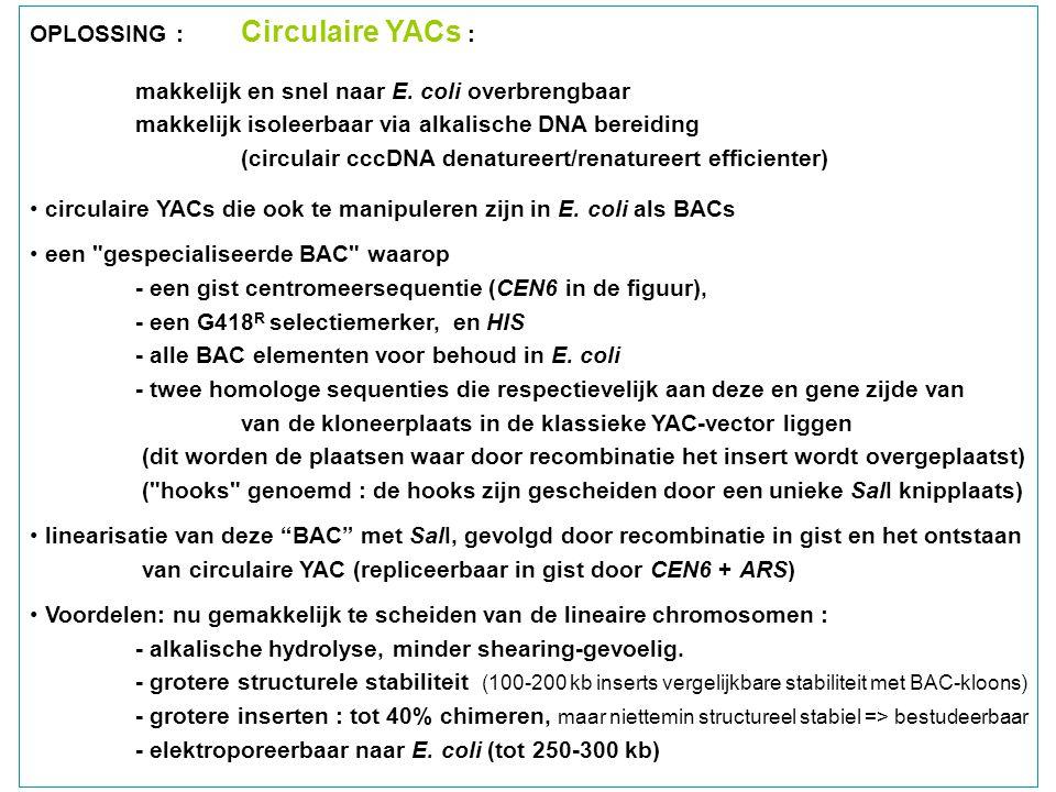 OPLOSSING : Circulaire YACs : makkelijk en snel naar E. coli overbrengbaar makkelijk isoleerbaar via alkalische DNA bereiding (circulair cccDNA denatu
