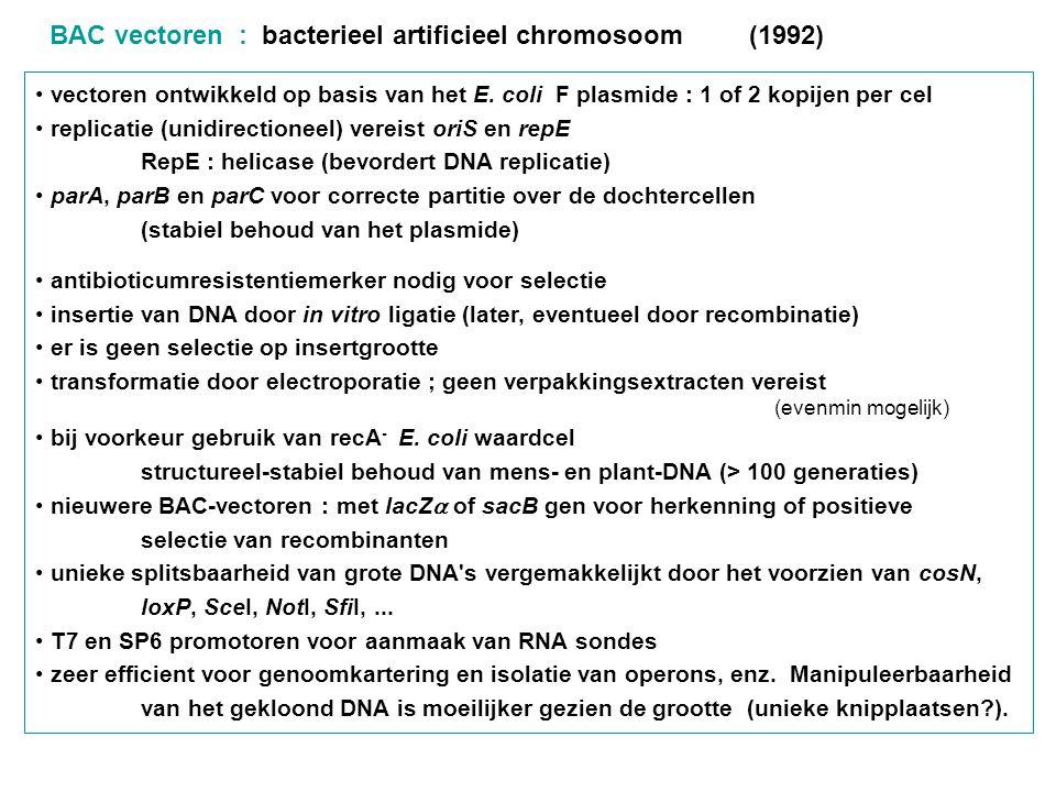BAC vectoren : bacterieel artificieel chromosoom (1992) vectoren ontwikkeld op basis van het E. coli F plasmide : 1 of 2 kopijen per cel replicatie (u