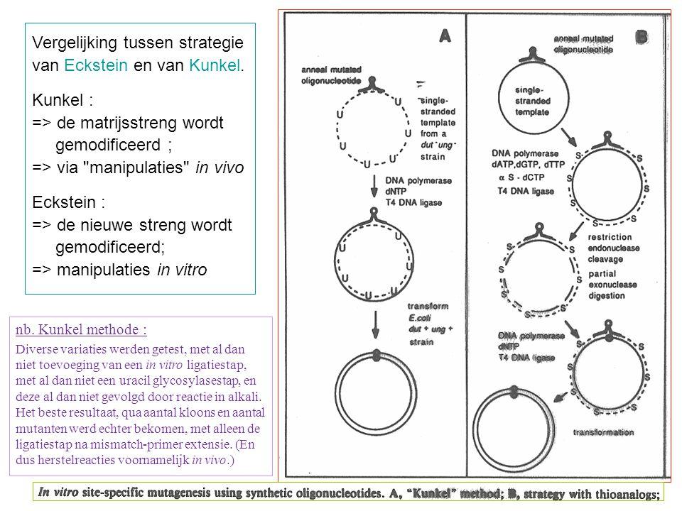 Vergelijking tussen strategie van Eckstein en van Kunkel. Kunkel : => de matrijsstreng wordt gemodificeerd ; => via
