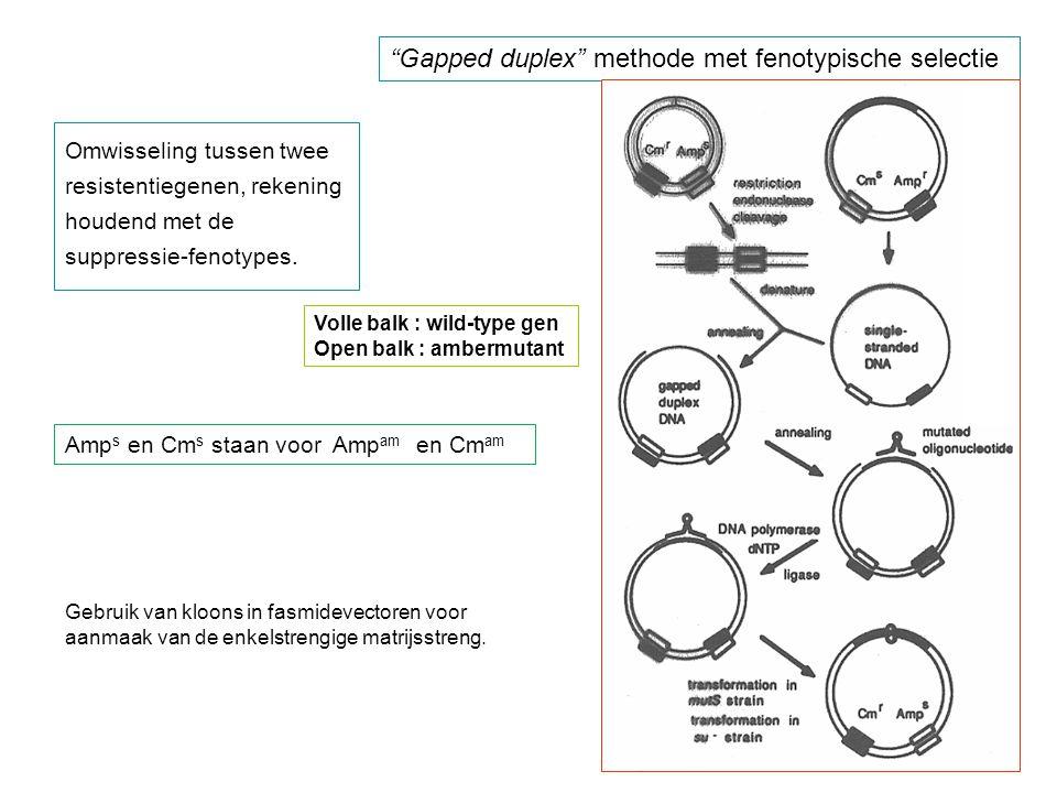 """""""Gapped duplex"""" methode met fenotypische selectie Omwisseling tussen twee resistentiegenen, rekening houdend met de suppressie-fenotypes. Volle balk :"""