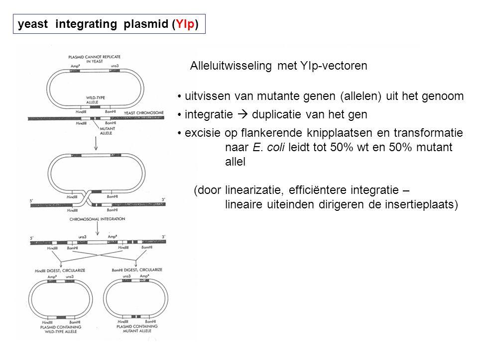 yeast integrating plasmid (YIp) Alleluitwisseling met YIp-vectoren uitvissen van mutante genen (allelen) uit het genoom integratie  duplicatie van he