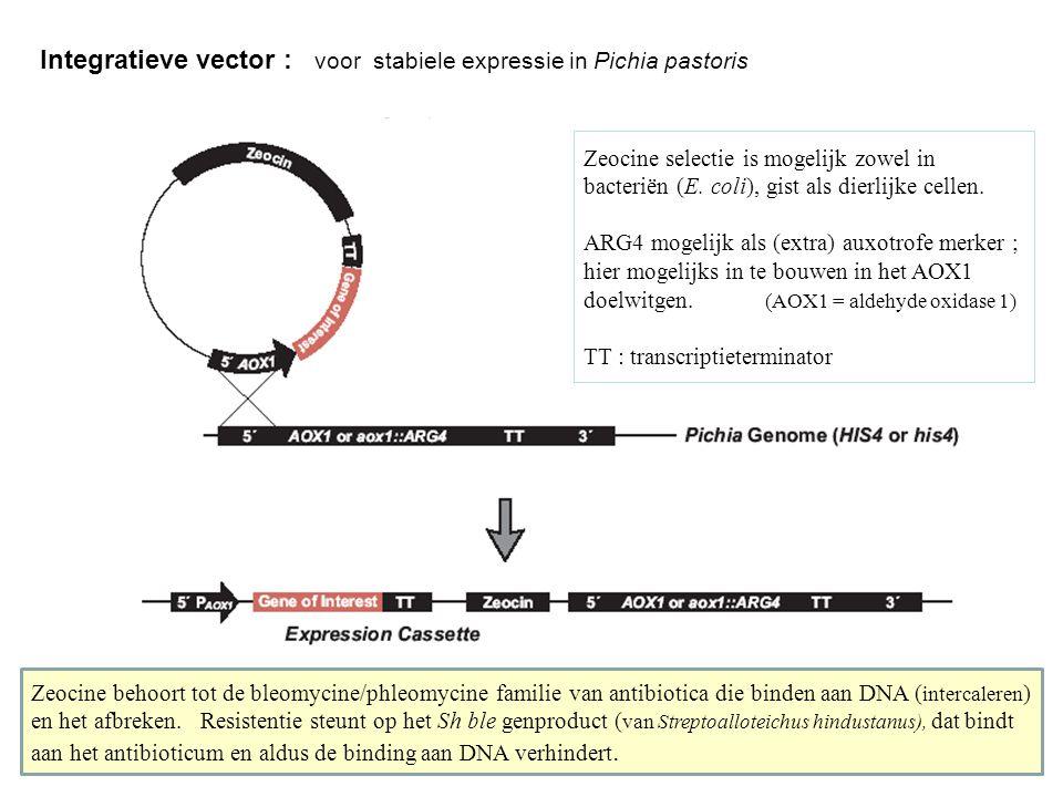 Integratieve vector : voor stabiele expressie in Pichia pastoris Zeocine selectie is mogelijk zowel in bacteriën (E. coli), gist als dierlijke cellen.
