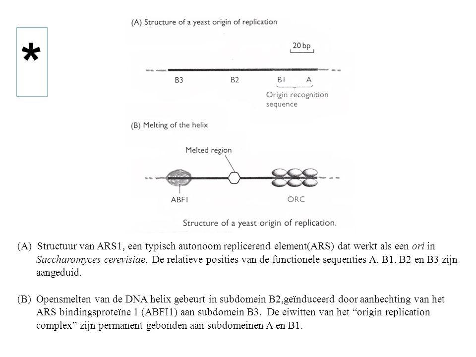 (A) Structuur van ARS1, een typisch autonoom replicerend element(ARS) dat werkt als een ori in Saccharomyces cerevisiae. De relatieve posities van de