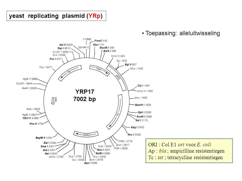 yeast replicating plasmid (YRp) YRP17 7002 bp ORI : Col E1 ori voor E. coli Ap : bla ; ampicilline resistentiegen Tc : tet ; tetracycline resistentieg