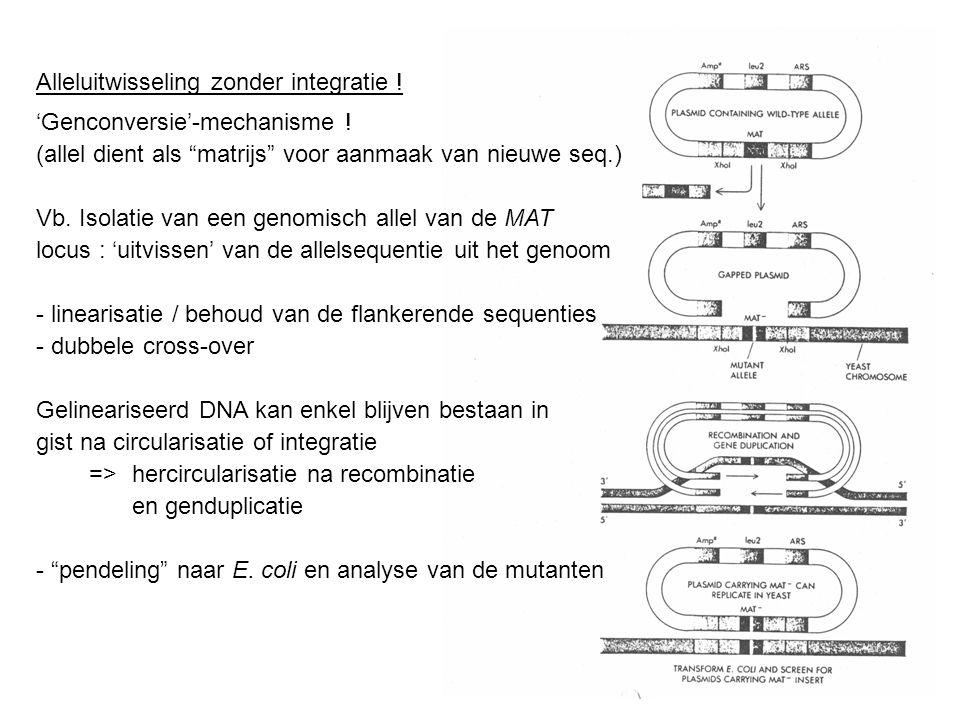 """Alleluitwisseling zonder integratie ! 'Genconversie'-mechanisme ! (allel dient als """"matrijs"""" voor aanmaak van nieuwe seq.) Vb. Isolatie van een genomi"""