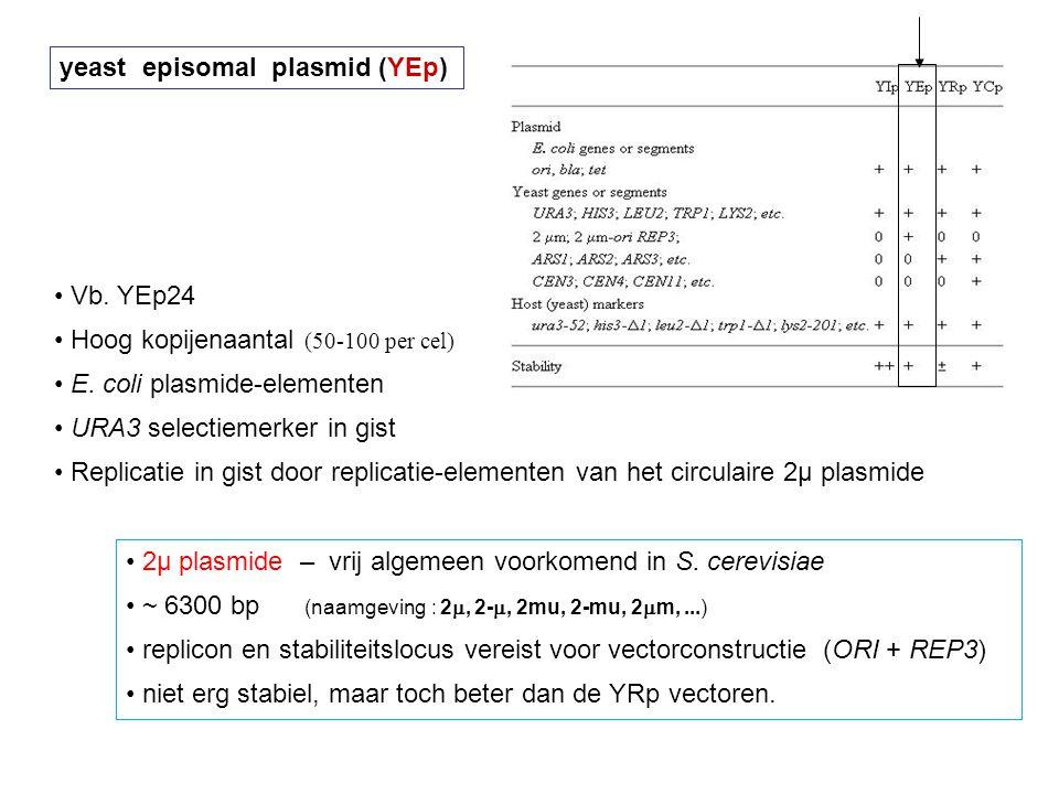 yeast episomal plasmid (YEp) Vb. YEp24 Hoog kopijenaantal (50-100 per cel) E. coli plasmide-elementen URA3 selectiemerker in gist Replicatie in gist d