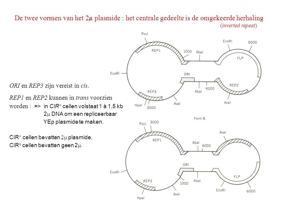 De twee vormen van het 2  plasmide : het centrale gedeelte is de omgekeerde herhaling (inverted repeat) ORI en REP3 zijn vereist in cis. REP1 en REP2