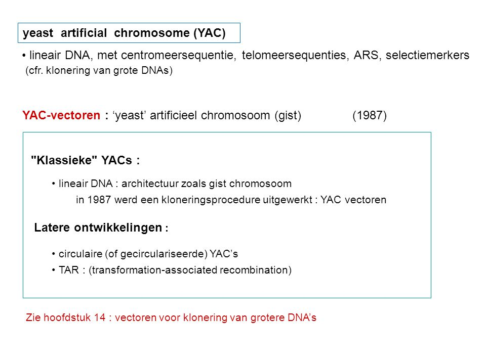 YAC-vectoren : 'yeast' artificieel chromosoom (gist) (1987)