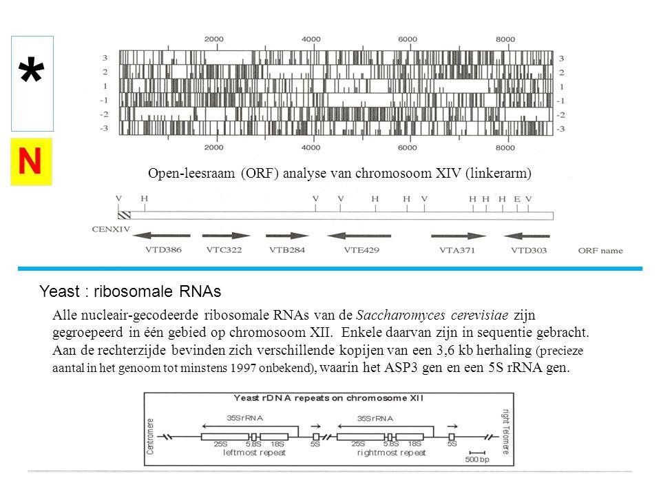Open-leesraam (ORF) analyse van chromosoom XIV (linkerarm) Yeast : ribosomale RNAs Alle nucleair-gecodeerde ribosomale RNAs van de Saccharomyces cerev
