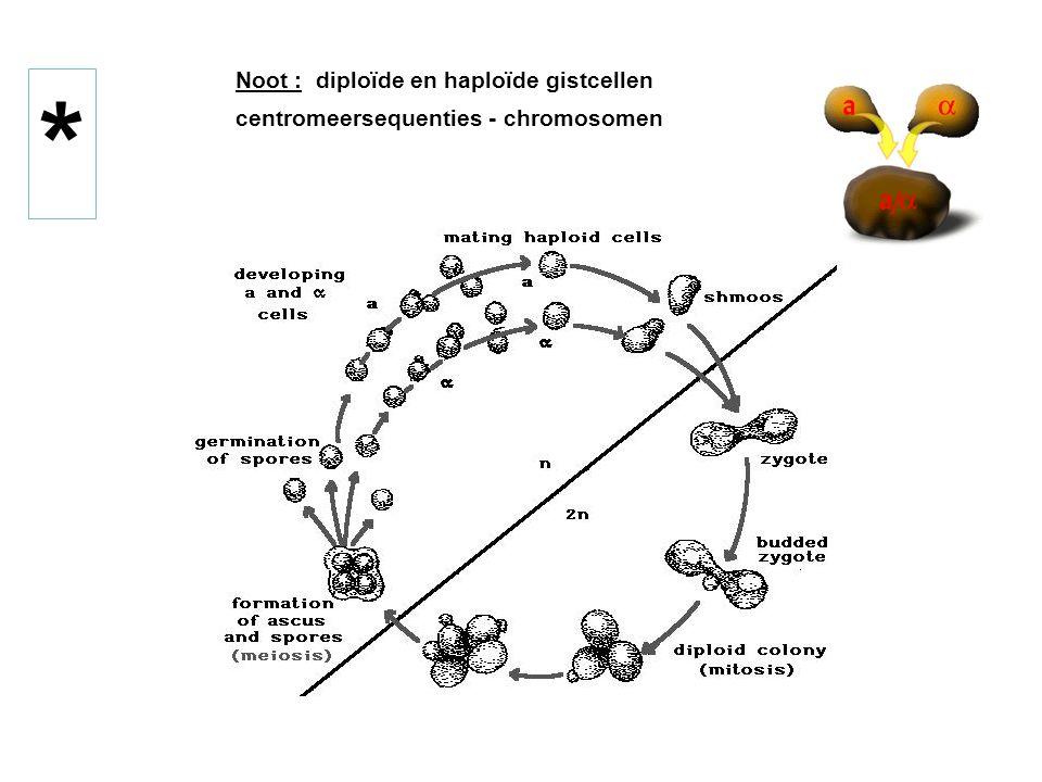 yeast centromere plasmids (YCp) Stabilisatie van een YRp door een CEN (centromeer) sequentie : ongeveer 120bp in budding yeast  vormt een minichromosoom : - stabiel in mitose (>10 kb) (selectie op stabilisatie) - segregeert mendeliaans in meïose - 1 kopij per cel