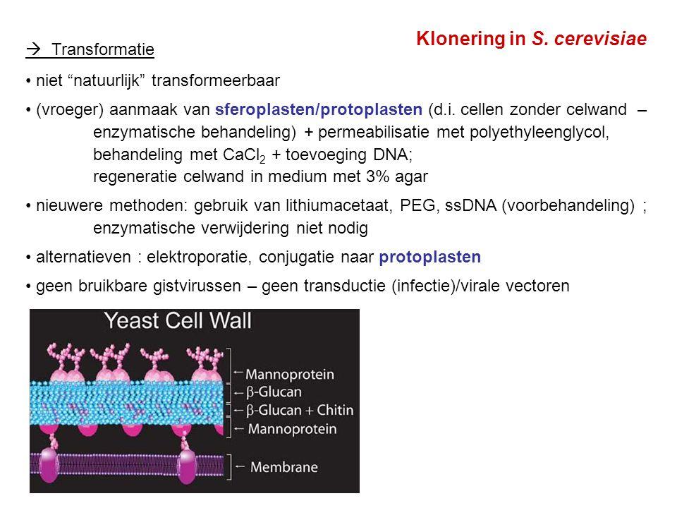 YAC-vectoren : 'yeast' artificieel chromosoom (gist) (1987) Klassieke YACs : lineair DNA : architectuur zoals gist chromosoom in 1987 werd een kloneringsprocedure uitgewerkt : YAC vectoren Latere ontwikkelingen : circulaire (of gecirculariseerde) YAC's TAR : (transformation-associated recombination) Zie hoofdstuk 14 : vectoren voor klonering van grotere DNA's yeast artificial chromosome (YAC) lineair DNA, met centromeersequentie, telomeersequenties, ARS, selectiemerkers (cfr.