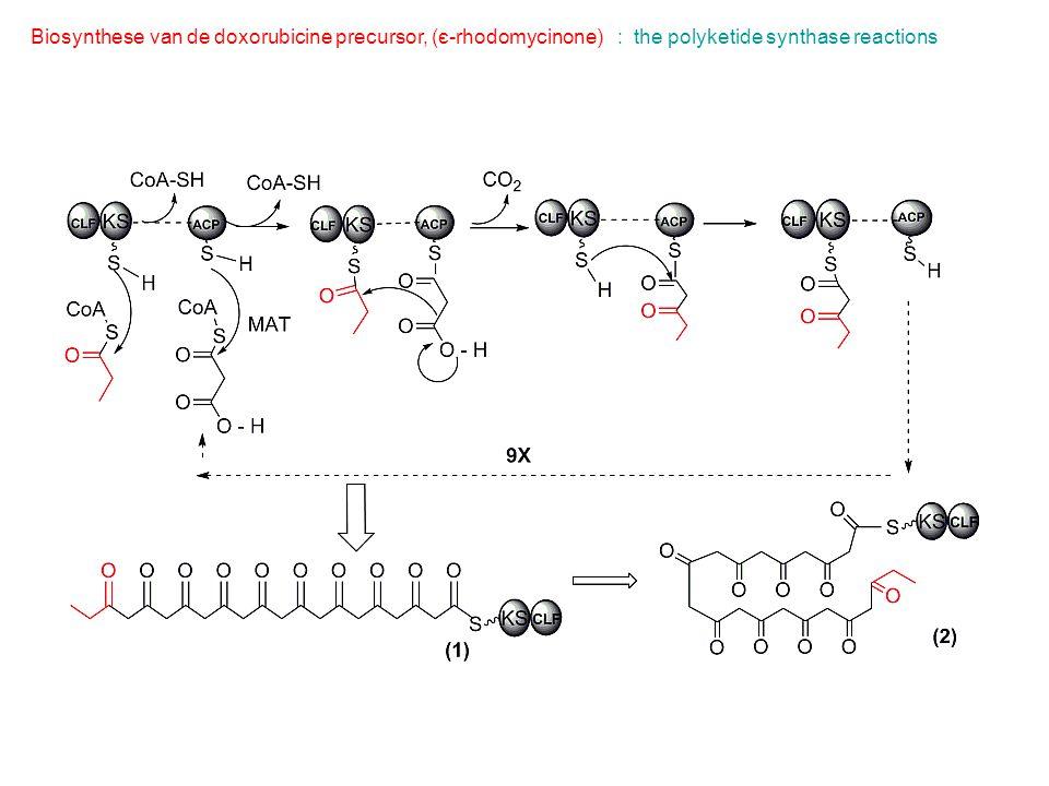 Biosynthese van de doxorubicine precursor, (є-rhodomycinone): the polyketide synthase reactions