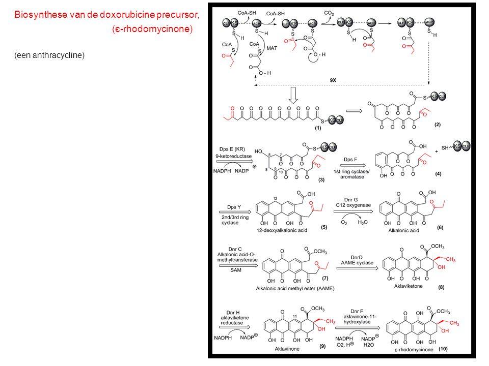 Biosynthese van de doxorubicine precursor, (є-rhodomycinone) (een anthracycline)