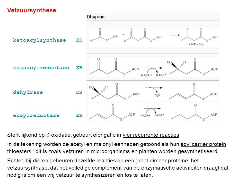 Drie facetten : acetyl / malonyl transferase (MAT) : transfer van de S-CoA binding naar ACP elongatie : condensatiereactie (KS) + reductie van de  -keto groep door ketoacylreductase (KR), dehydratase (DH) en enoylreductase (ER) (m.a.w.