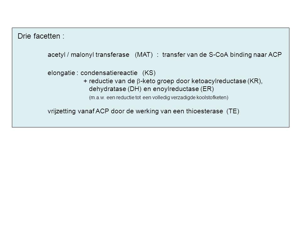 Drie facetten : acetyl / malonyl transferase (MAT) : transfer van de S-CoA binding naar ACP elongatie : condensatiereactie (KS) + reductie van de  -k