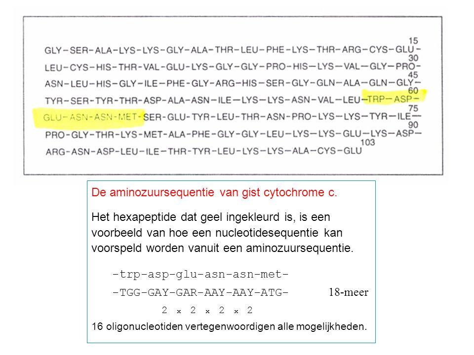 De aminozuursequentie van gist cytochrome c. Het hexapeptide dat geel ingekleurd is, is een voorbeeld van hoe een nucleotidesequentie kan voorspeld wo
