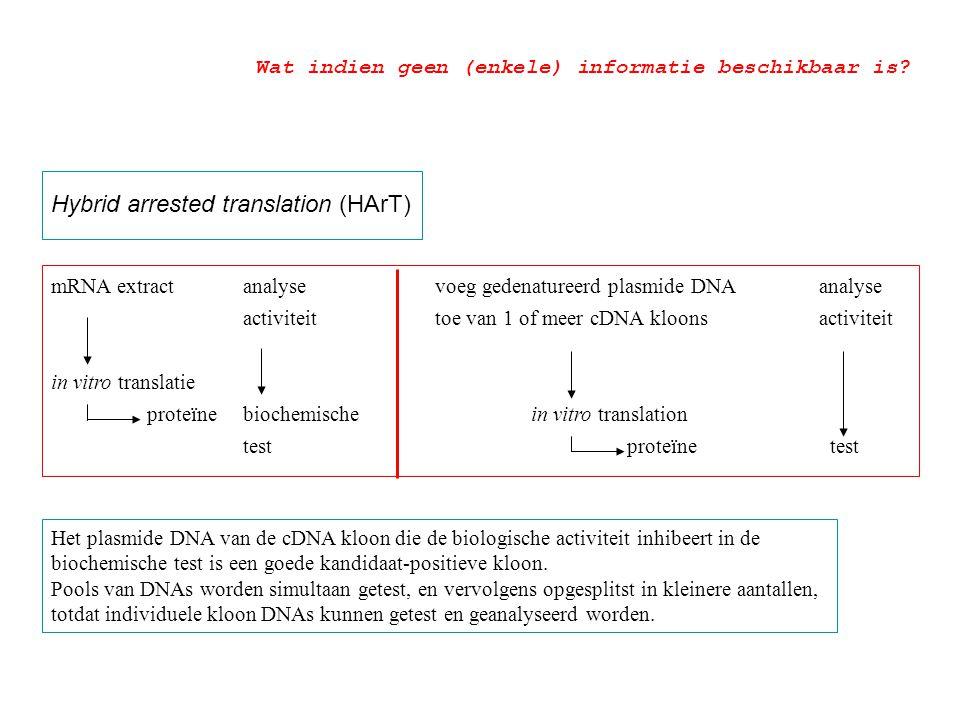 Hybrid arrested translation (HArT) mRNA extractanalyse voeg gedenatureerd plasmide DNA analyse activiteit toe van 1 of meer cDNA kloonsactiviteit in v