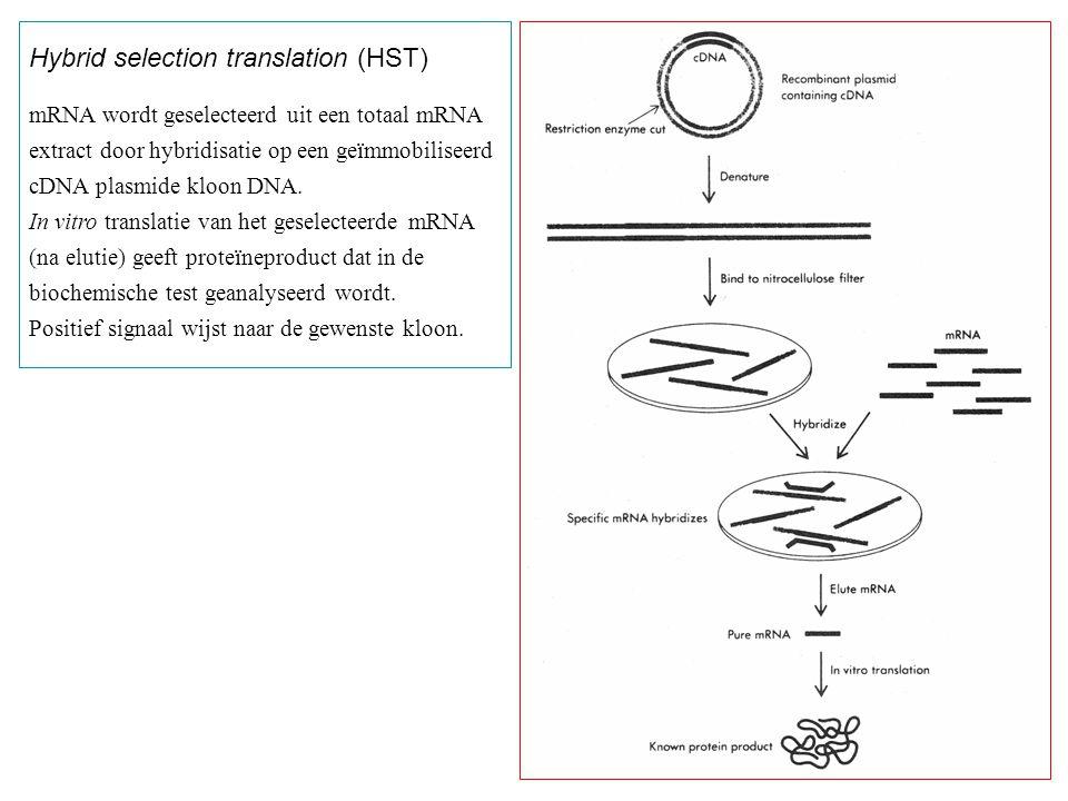 Hybrid selection translation (HST) mRNA wordt geselecteerd uit een totaal mRNA extract door hybridisatie op een geïmmobiliseerd cDNA plasmide kloon DN