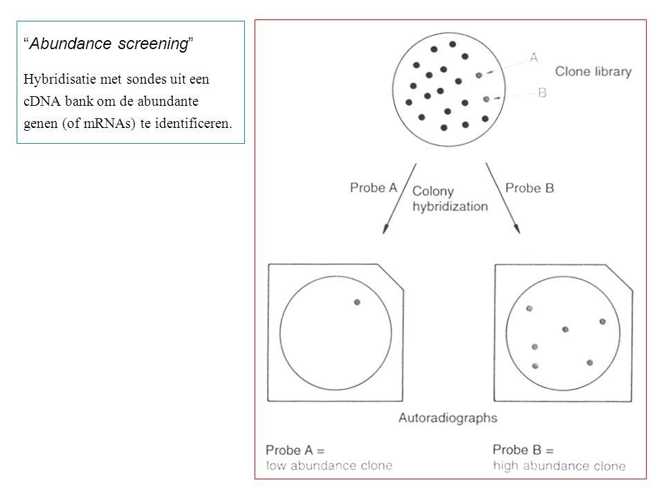 """""""Abundance screening"""" Hybridisatie met sondes uit een cDNA bank om de abundante genen (of mRNAs) te identificeren."""