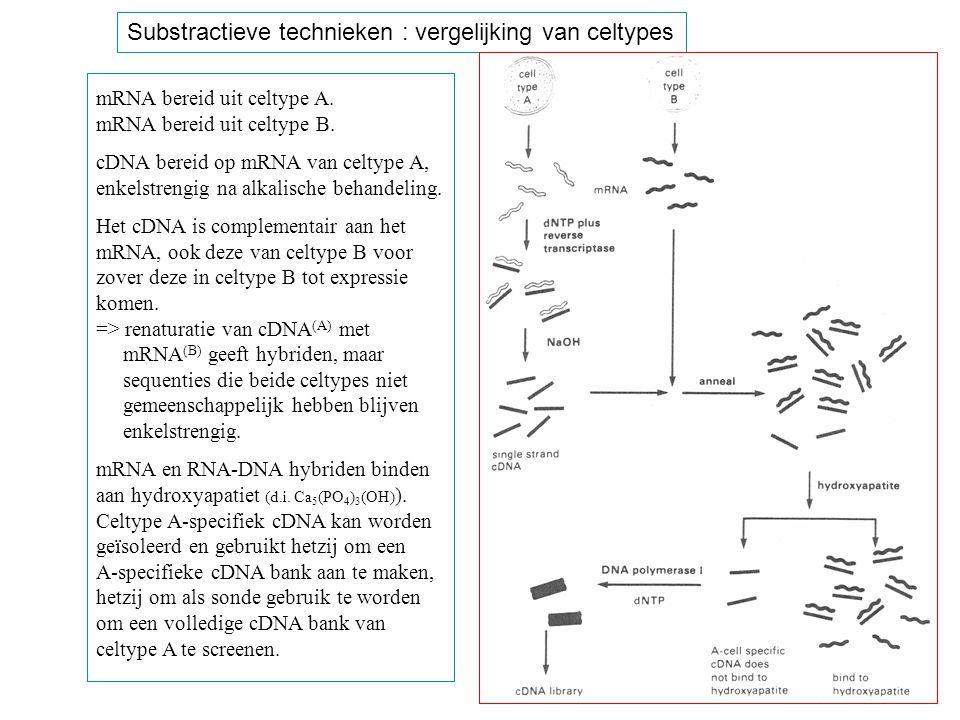 Substractieve technieken : vergelijking van celtypes mRNA bereid uit celtype A. mRNA bereid uit celtype B. cDNA bereid op mRNA van celtype A, enkelstr