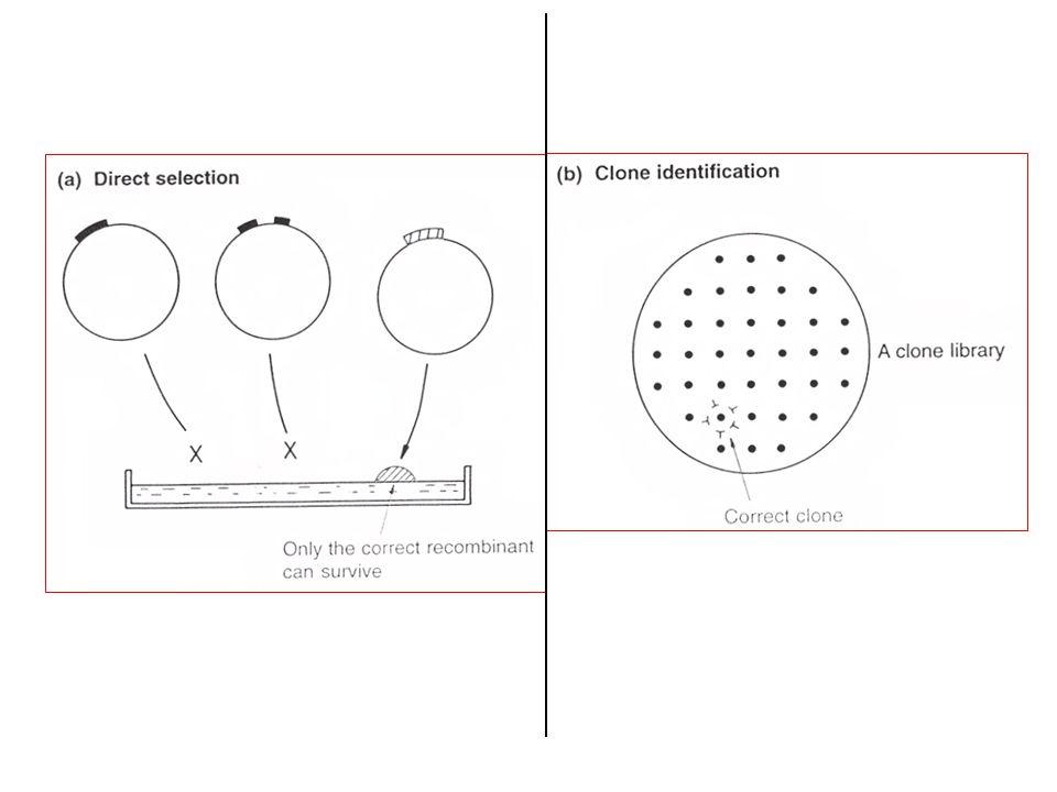 Gebruik van een synthetisch, gemerkt of geëtiketteerd oligonucleotide (of mengsel van alle mogelijke sequenties) om een kloon van het cytochroom c gen van gist te identificeren.