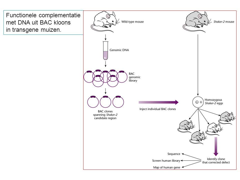 Functionele complementatie met DNA uit BAC kloons in transgene muizen.