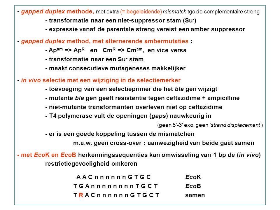 - gapped duplex methode, met extra (= begeleidende) mismatch tgo de complementaire streng - transformatie naar een niet-suppressor stam (Su - ) - expressie vanaf de parentale streng vereist een amber suppressor - gapped duplex method, met alternerende ambermutaties : - Ap am => Ap R en Cm R => Cm am, en vice versa - transformatie naar een Su - stam - maakt consecutieve mutageneses makkelijker - in vivo selectie met een wijziging in de selectiemerker - toevoeging van een selectieprimer die het bla gen wijzigt - mutante bla gen geeft resistentie tegen ceftazidime + ampicilline - niet-mutante transformanten overleven niet op ceftazidime - T4 polymerase vult de openingen (gaps) nauwkeurig in (geen 5 -3 exo, geen 'strand displacement') - er is een goede koppeling tussen de mismatchen m.a.w.