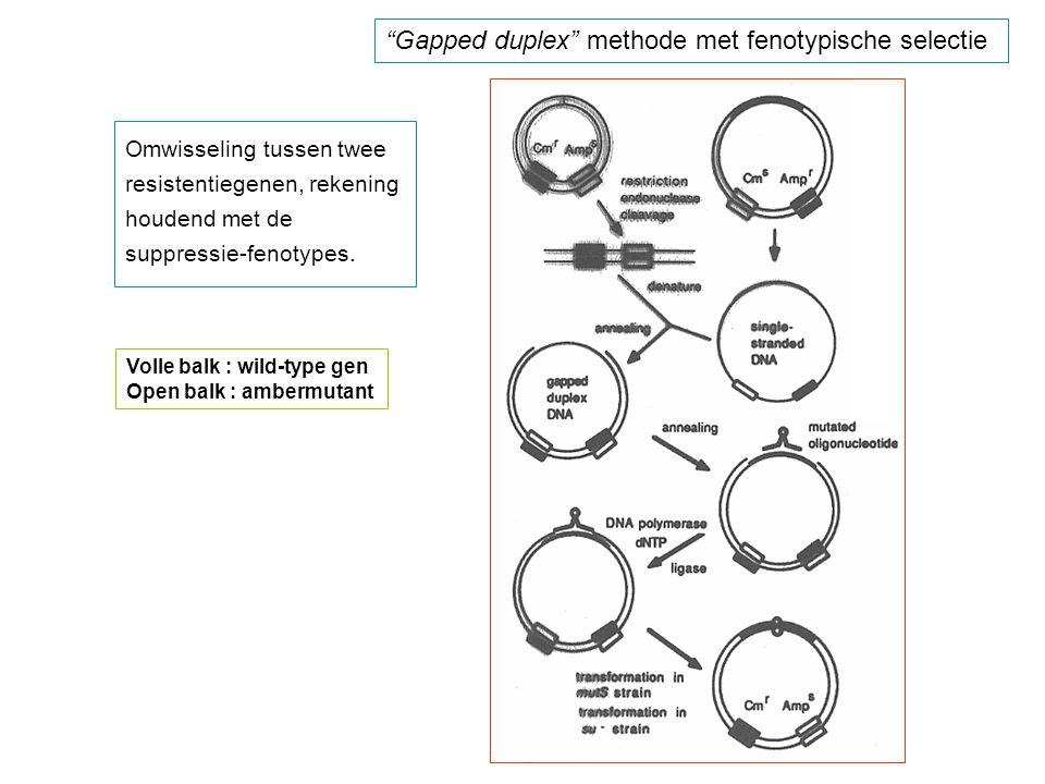 Gapped duplex methode met fenotypische selectie Omwisseling tussen twee resistentiegenen, rekening houdend met de suppressie-fenotypes.