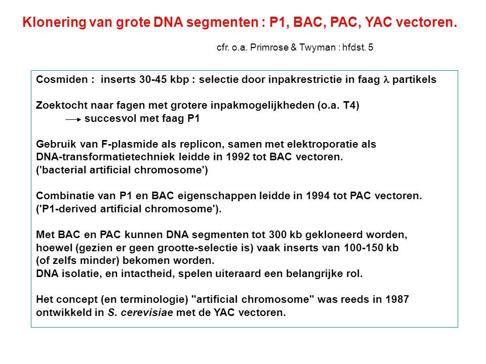 Klonering van grote DNA segmenten : P1, BAC, PAC, YAC vectoren. cfr. o.a. Primrose & Twyman : hfdst. 5 Cosmiden : inserts 30-45 kbp : selectie door in