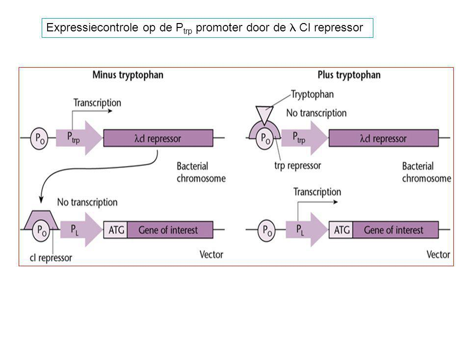 Expressiecontrole op de P trp promoter door de CI repressor